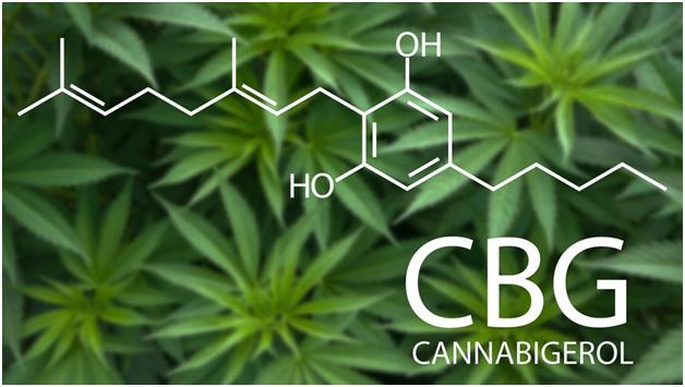 The New and Promising Cannabinoid- CBG or Cannabigerol